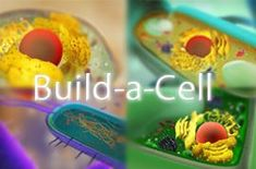 Build-A-Cell is a drag and drop game to teach students about the organelles and…