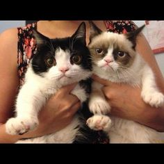 """Grumpy cat """"Once you met her brother """"Pokey"""", it was easier to understand how Tard became Grumpy Cat. Pokey was the cute one and everybody loved Pokey."""" -Other pinner"""