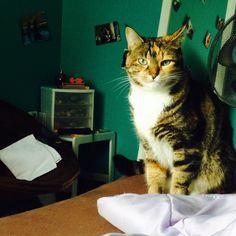 Catten Cat | Pawshake Calgary