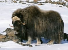 YAK - for my Deep Creek friends.  Turn right at the YAK .... ha-ha
