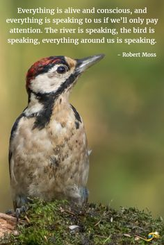 """""""Everything is alive and conscious, and everything is speaking to us if we'll only pay attention. The river is speaking, the bird is speaking, everything around us is speaking."""" - Robert Moss  http://theshiftnetwork.com/?utm_source=pinterest&utm_medium=social&utm_campaign=quote"""