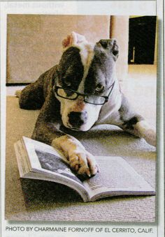 "Just reading the ""Daily Bark"""