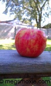 The Honey Crisp Apple is SO sweet and Juicy!  Find out more about why I love them!