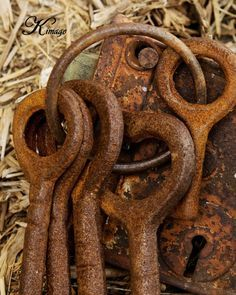 Not my circus . not my monkeys Antique Keys, Vintage Keys, Rusty Garden, Rust Never Sleeps, Knobs And Knockers, Door Knobs, Not My Circus, Rust In Peace, Old Keys