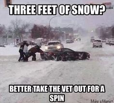 Dump A Day Funny Pictures Of The Day - 74 Pics You know teu do not live in a place that gets snow all the time! Funny Car Quotes, Funny Fails, Humor Quotes, Truck Quotes, Car Jokes, Car Humor, Truck Memes, Funny Images, Funny Photos