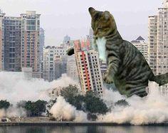 catzilla destroys highrise building