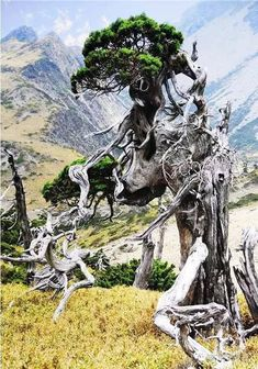 natural bonsai #bonsai
