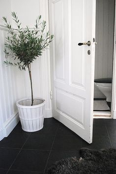 Potted olive tree near the under-the-stairs guest bathroom Julias via Drömmar