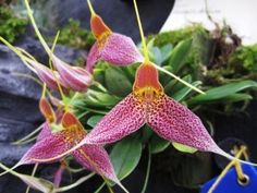 Seattle Orchid - For All Your Orchid Needs | OrchidsMadeEasy.com