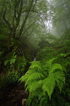 Fern in forest by frjm on 500px