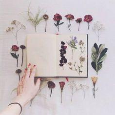 Male your own herbarium Art Floral, Scrapbooking Diy, Estilo Tropical, Deco Originale, Nature Journal, Garden Journal, Handmade Home, Dried Flowers, Bouquet Flowers