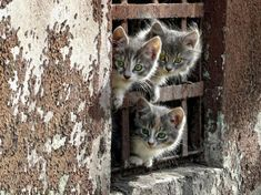 Three little kittens have lost their mittens. Cute Kittens, Little Kittens, Cats And Kittens, I Love Cats, Crazy Cats, Animals Beautiful, Cute Animals, Caracal, All About Cats