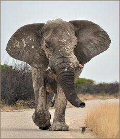Africa   This is my road.  Etosha National Park. Namibia   © Gabi ~ gvst* on flickr