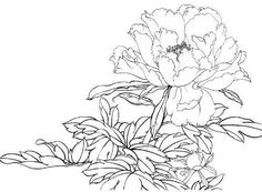 раскраска пион Realistic Flower Drawing, Floral Drawing, Plant Illustration, Botanical Illustration, Fabric Painting, Painting & Drawing, Chinese Embroidery, Flower Coloring Pages, Silk Art