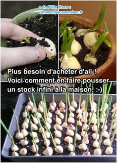10 l gumes faire pousser pendant l hiver jardin pinterest jardins jardinage et potager. Black Bedroom Furniture Sets. Home Design Ideas