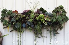 Vertical succulent display by Andi Ogden Types Of Succulents, Hanging Succulents, Cacti And Succulents, Propagating Succulents, Succulent Display, Succulent Wall Art, Succulent Ideas, Succulent Containers, Plant Wall