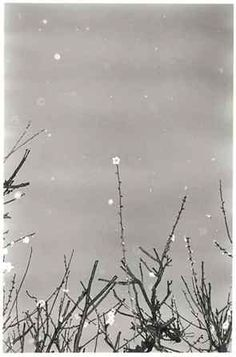 Masao YAMAMOTO - Refined, subtle and powerful Photography