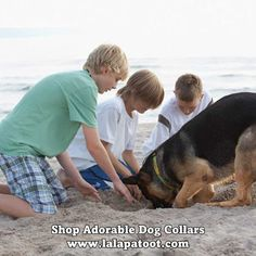 Shop Adorable Dog Collars: Visit us at www.lalapatoot.com #lalapatoot #dogs #pets