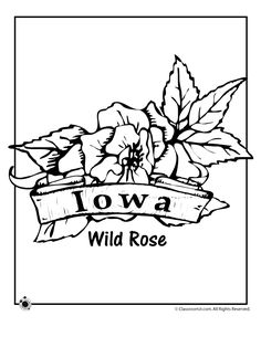 State Flower Coloring Pages Iowa State Flower Coloring Page – Classroom Jr.