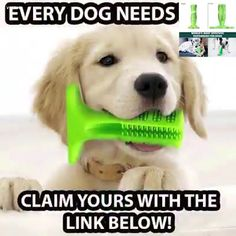 4 of 5 dogs suffer from oral issues by the age of 😱😱😱 Use this brush to minimize signs of gingivitis and bad breath! 🤢 Clean your dog's teeth while they bite and play with it! Animals And Pets, Baby Animals, Cute Animals, Pet Dogs, Dogs And Puppies, Doggies, Dog Teeth, Dog Accessories, Dog Supplies