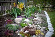 Bildresultat för trädgård rabatt