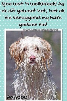 animals in rain - Dog Pictures, Animal Pictures, Cute Quotes, Funny Quotes, Afrikaanse Quotes, Goeie Nag, Rain Art, Rainy Days, Animals