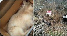 Prosecute Person That Destroyed A Pekinese And Dumped The Body Into The Woods in Westmoreland County! | PetitionHub.org