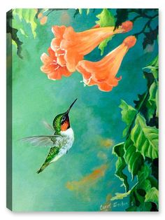 Hummingbird and Trumpet Acrylic Canvas, Canvas Art, Hummingbird Drawing, Hummingbird Tatoos, Watercolor Flowers, Watercolor Paintings, Watercolour, Devin Art, Spring Painting