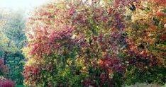 20книг для детей до12лет, благодаря которым они влюбятся вчтение Claude Monet, Garden, Plants, Painting, Book, Art, Craft Art, Garten, Gardening