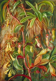 Seychelles Pitcher Plant and Bilimb Marron Artist: Marianne North Completion Date: 1883 Style: Naturalism Genre: flower painting
