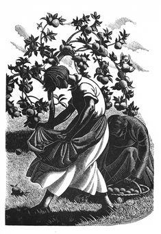 """Clare Leighton """"Four Hedges - gathering windfalls"""" Wood Engraving Leighton's skill in use of light and dark is evident, she is unafraid to leave large areas barely touched to bold effect."""