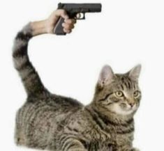 Nightmares For Pay I Love Cats, Cute Cats, Funny Cats, Funny Animals, Cute Animals, Funny Images, Funny Pictures, Photo Chat, Cursed Images