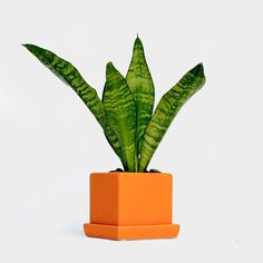 Nationwide Delivery On Small Plants Large Plant To Manhattan Brooklyn Queens
