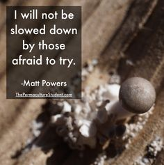 Keep striving to be regenerative no matter where you are in the process of transition! #Permaculture #MattPowers #Strive #Growth #Perseverance