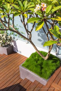 Outdoor Establishments is a Sydney based Landscape Architecture & Residential Garden Design firm also offering clients Landscape Construction, Professional Horticulture and Garden Maintenance. A complete Landscape service from concept to completion. Backyard Pool Designs, Swimming Pools Backyard, Backyard Landscaping, Landscape Elements, Landscape Design, Landscape Architecture, Architecture Design, Plumeria Tree, Rooftop Garden