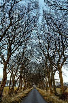 Winter Lane,Scotland