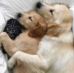 I love dogs, cute puppies, dogs and puppies, baby animals, animals an Cute Dogs And Puppies, Baby Puppies, I Love Dogs, Doggies, Cute Animal Videos, Cute Animal Pictures, Dog Pictures, Cute Baby Animals, Funny Animals