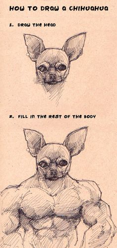 How to draw a chihuahua --from Push The Movement