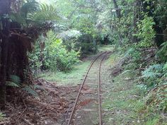 Forest Railway In The Waitakere Ranges. 2011.