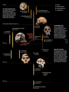 Anthropogenesis TIMELINE