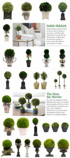 Topiary inspiration! For more ideas or to buy click here