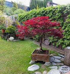 If you intend to grow the bonsai from seeds, remember that you want to set the seeds in a fridge for around a week before planting. Growing a bonsai can be an Japanese Garden Backyard, Small Japanese Garden, Japanese Garden Design, Japanese Garden Landscape, Balcony Garden, Garden Planters, Bonsai Soil, Bonsai Garden, Acer Bonsai