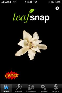 Leafsnap--(free) is an electronic field guide that uses visual recognition software to help identify tree species from photographs of their leaves.