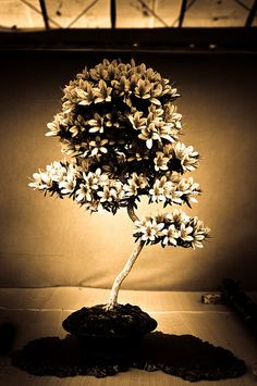 & a Bonsai. Bonsai Forest, Bonsai Art, Bonsai Plants, Bonsai Garden, Garden Trees, Trees To Plant, Bonsai Flowers, Bonsai Trees, Plantas Bonsai