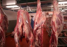 Where's The Beef! Horsemeat Scandal Reveals U.S. Illegally Exports Horses & European Meat Tainted With Drugs (DETAILS)
