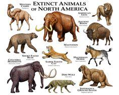 Extinct Animals of North America