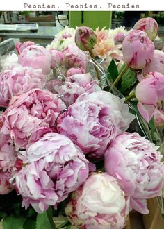 Peonies! My favorite fragrance :) The first time I smelled one was in a garden in St. Cloud, Minn.!!