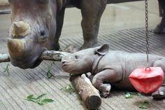 Mama rhino and new baby