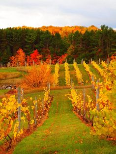 Fall Colors at Willow Winery by Pure Michigan, via Flickr
