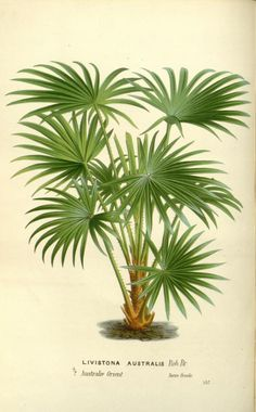 v.17 (1867-68) - Flore des serres et des jardins de l'Europe - Biodiversity…